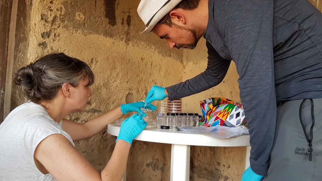 Bacterial research in the village